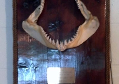 Nice Pt. Pleasant Jaws