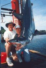 NJ Mako Shark fishing